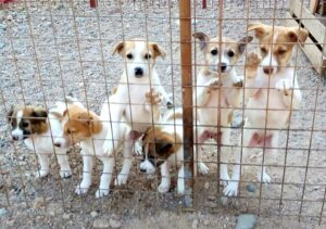 Image of street dogs in the Al Rabee Society for Nature and Animal Protection (RSNAP) shelter in Jordan